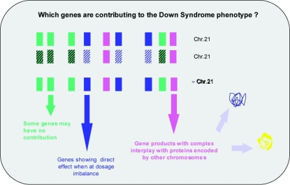 Gene Contribution to DS phenotype
